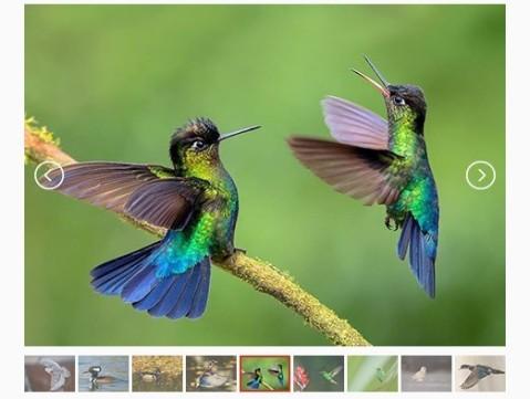 Lightweight-Responsive-Content-Slider-Plugin-with-jQuery-CSS3-lightslider